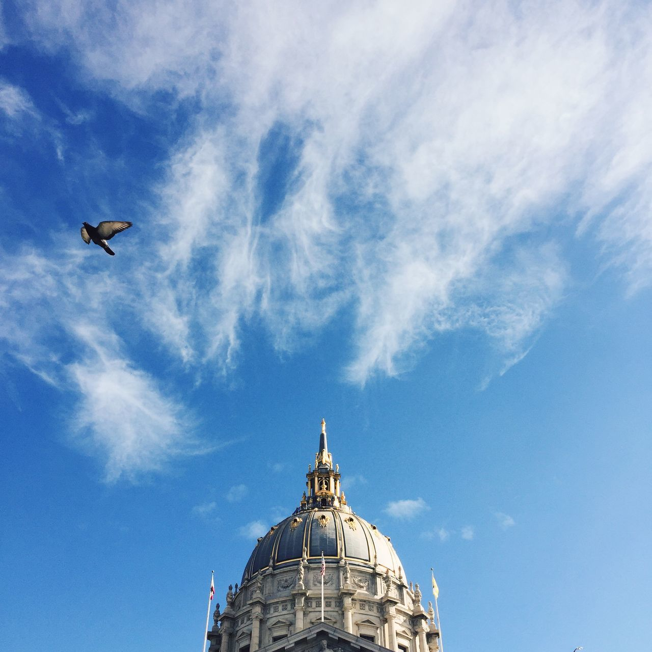 San Francisco City Hall, San Francisco, USA. Animal Themes Architecture Bird Blue Building Exterior California Cloud - Sky Day Flying IPhone IPhoneography Low Angle View No People Outdoors San Francisco San Francisco City Hall Sculpture Sky Square Statue USA
