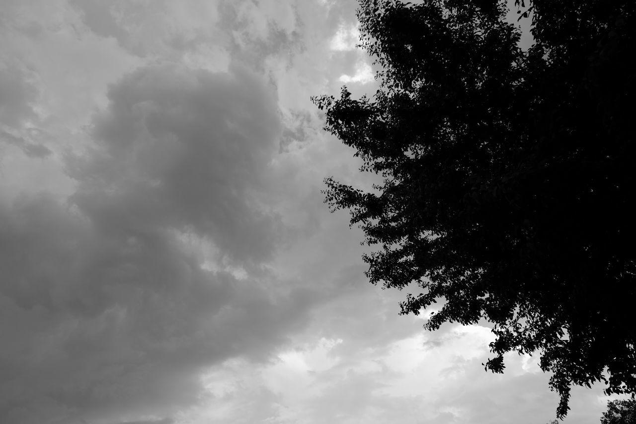 Storm clouds and holm oak Cloud - Sky Holm Oak Nature No People Outdoors Scenics Sky Storm Tree