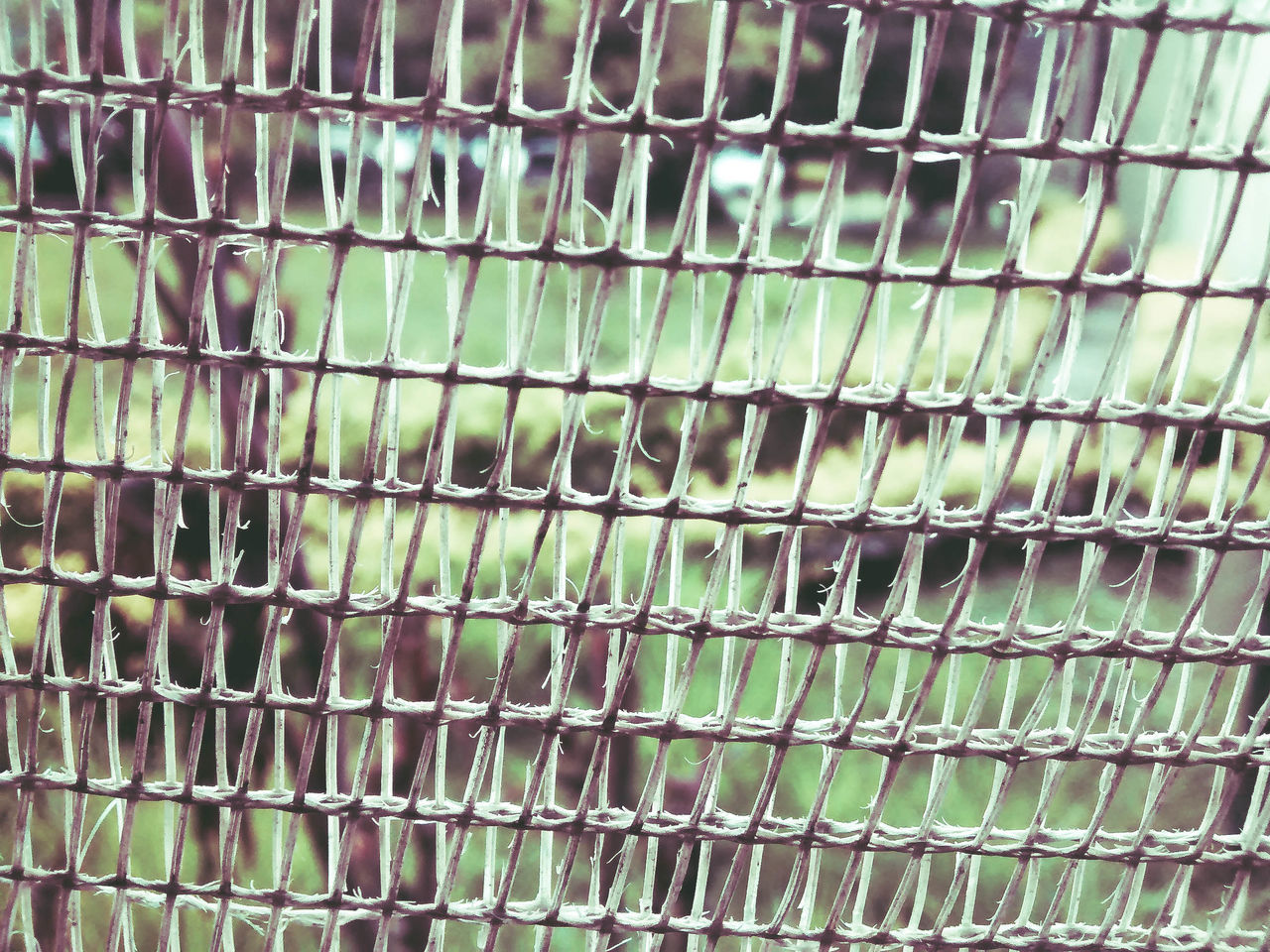 green color, full frame, no people, backgrounds, pattern, cage, close-up, day, outdoors, animal themes, nature, freshness