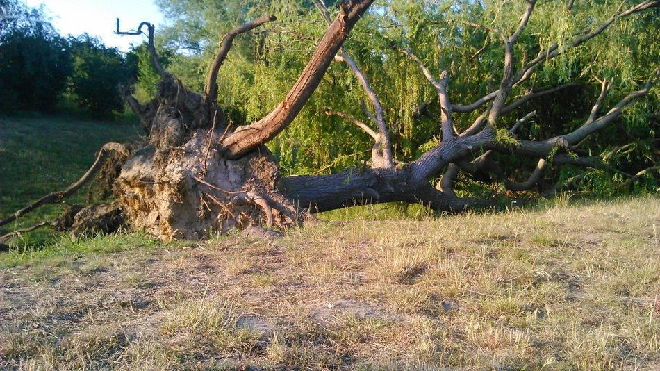 Germany Barleben Tree Fallen Tree