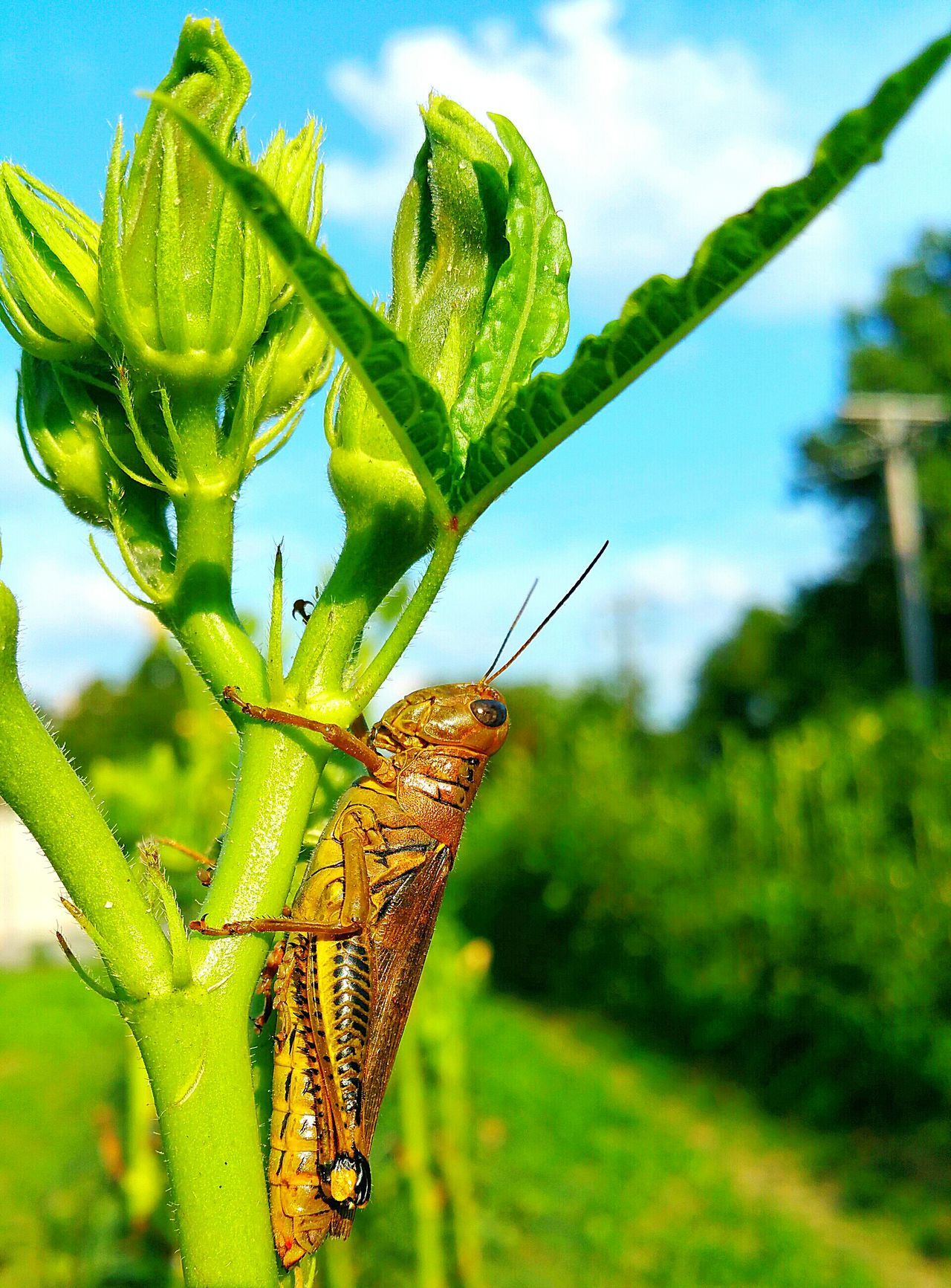 One Animal Insect Animal Themes Green Color Leaf Wildlife Animals In The Wild Plant Close-up Sky Growth Focus On Foreground Nature Zoology Day Outdoors Green Beauty In Nature No People Freshness Cricket! Crickets No Filter