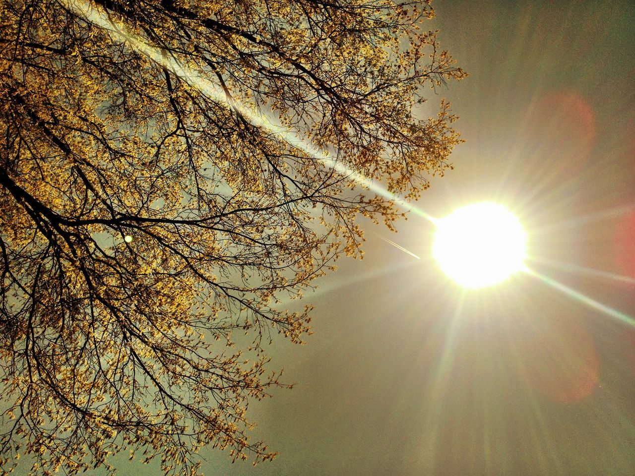 sun, tree, beauty in nature, nature, branch, sunbeam, lens flare, scenics, sunlight, tranquility, sunset, no people, tranquil scene, sky, outdoors, low angle view, bare tree, growth, day