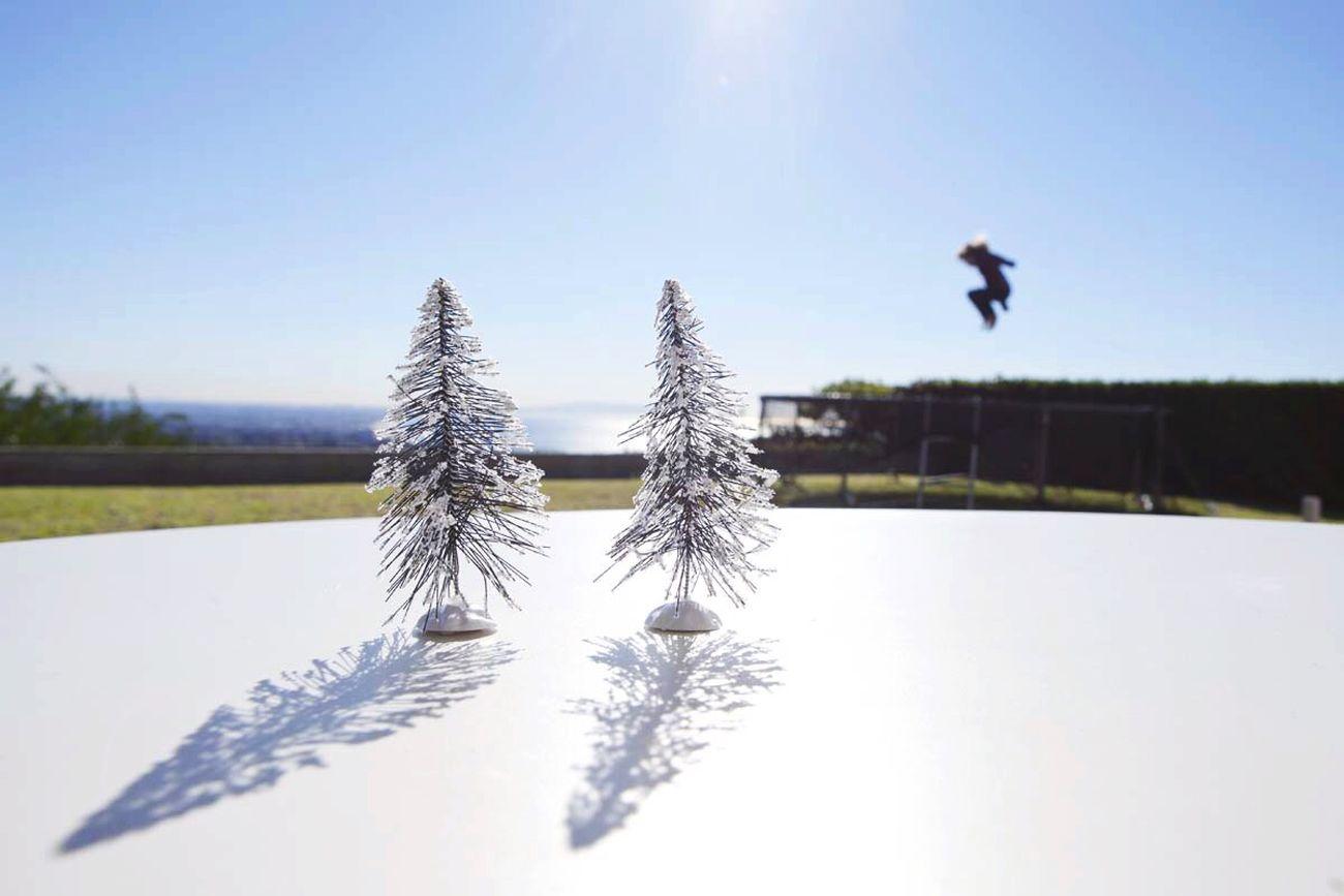 Open Edit Trees EyeEm Best Shots California Bluesky The Action Photographer - 2015 EyeEm Awards The Moment - 2015 EyeEm Awards