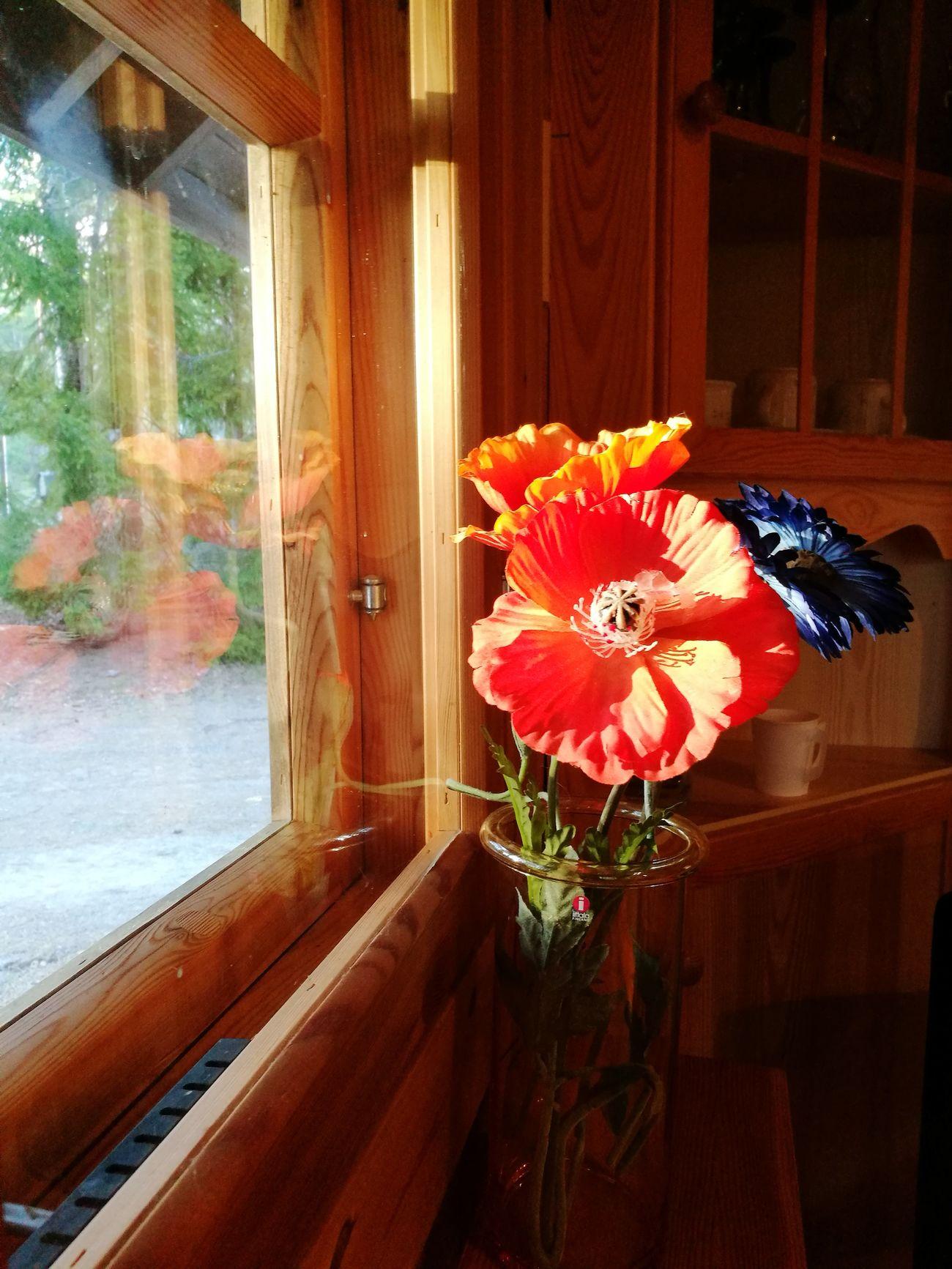 Orangeandblue Fakeflowers Flowersoftheday