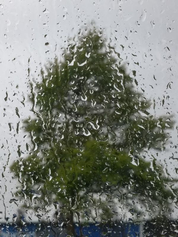 4 seasons in one day 😄Glass - Material Window Hamilton, New Zealand That Tree Spring In New Zealand Lush Foliage No People Single Tree Raindrops Tranquil Scene Outdoors Blue Color Tranquility Day Nature High Angle View Rain Low Angle View Grey Sky Grey RainDrop Sky Backgrounds Drop Water