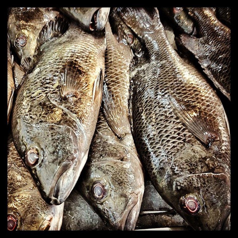 Fishda. Sugba w/ butter o Sinabawan. Panalo ang Managat . Fish Food Seafood philippines