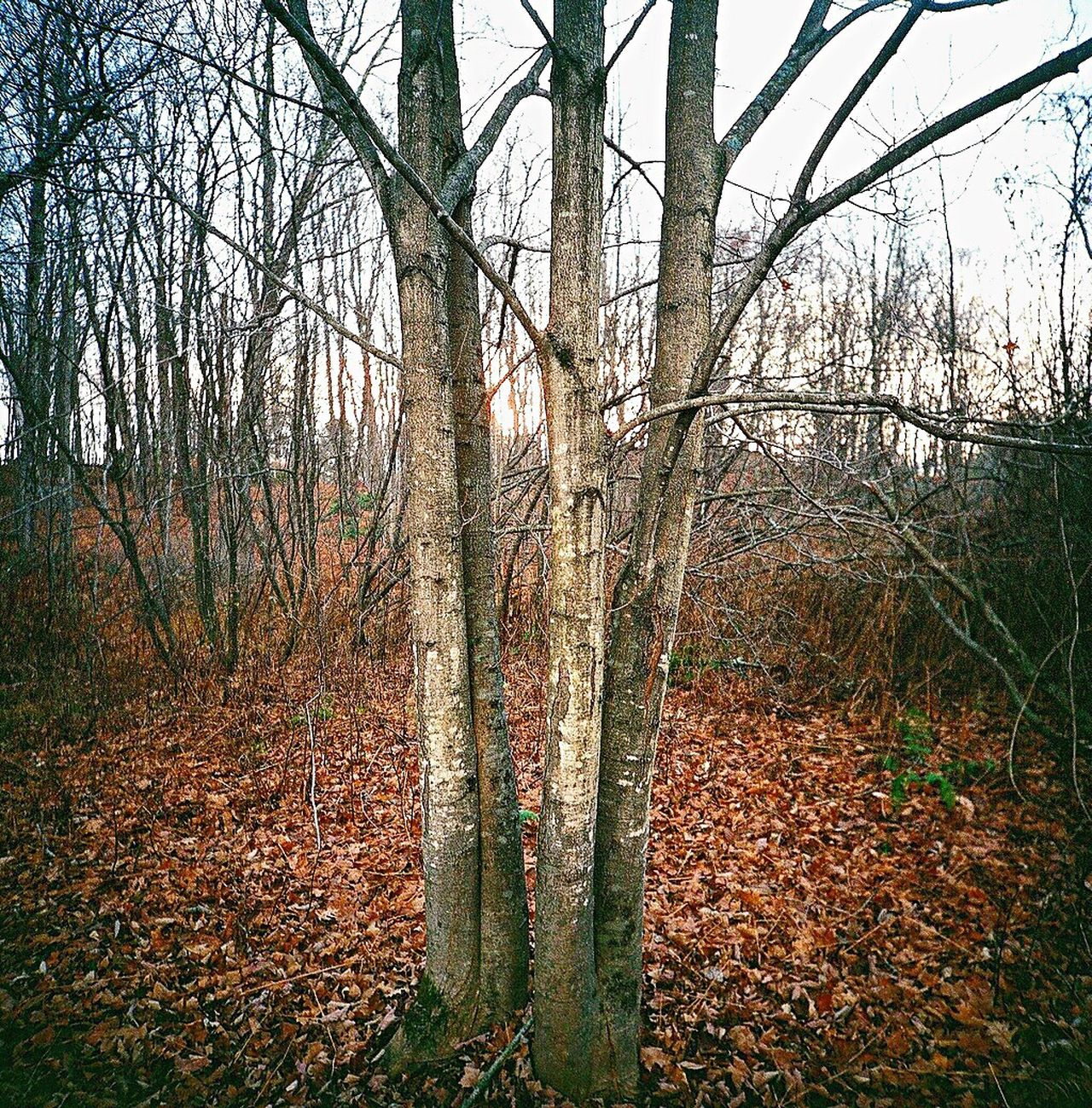 Koduckgirl Outdoors Film Tree Trunk Nature Tree Branch Autumn
