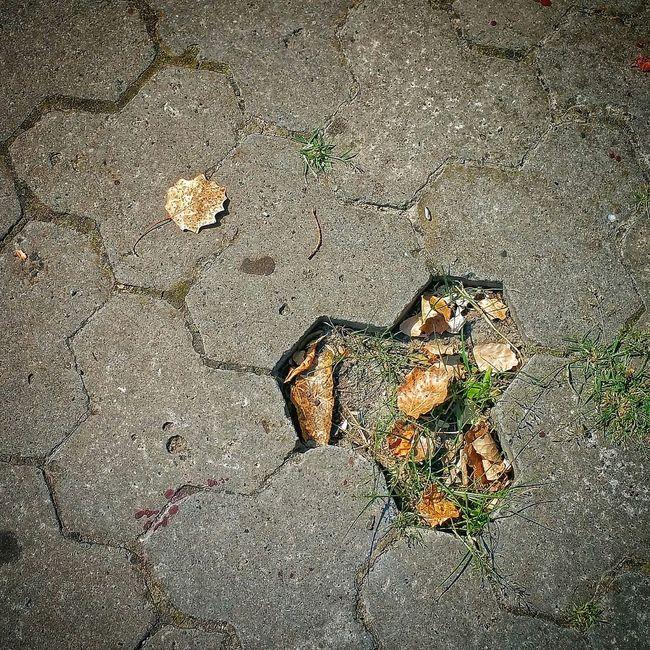 Missing - on a sidewalk in Kherson, Ukraine Walking Around Snapseed Leaves Missing Kherson Ukraine 💙💛 херсон Україна