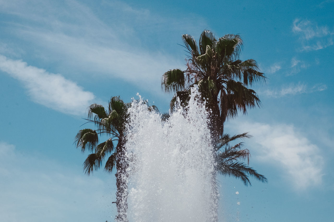 Beauty In Nature Day Growth Low Angle View Motion Nature No People Outdoors Palm Tree Sky Summer Summertime Tree Water Live For The Story