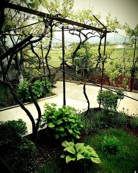 My Year My View Tree Growth Day Nature Outdoors Green Color Plant No People Beauty In Nature Water Sky My Home