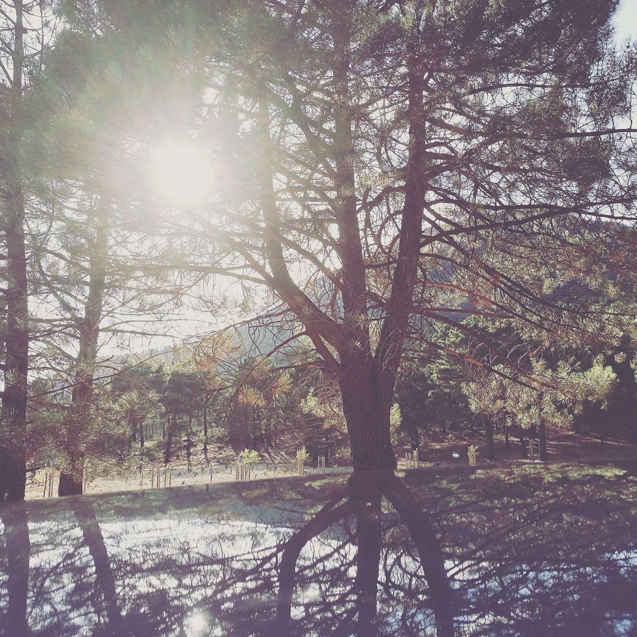 Y cerró fuerte los ojos deseando que, al volver a montarse en el coche, sonara el teléfono. ««Microhistorias»» Luz No People Andalucía Tesis99 Nature Reflections Reflejos Tranquil Scene Sky Cielo Tree árbol HuaweiP9 Lugares Places Hojas Sol Sun Viajes  Microhistorias Microhistoriastesis99 Travel Stop Sunlight LuzdelSol DCP
