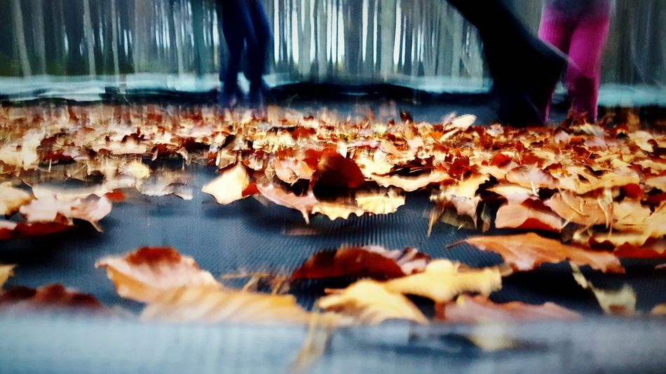 This Is Autumn day 25. Leaves Jumping Trampoline Fun Outdoors Autumn Fun