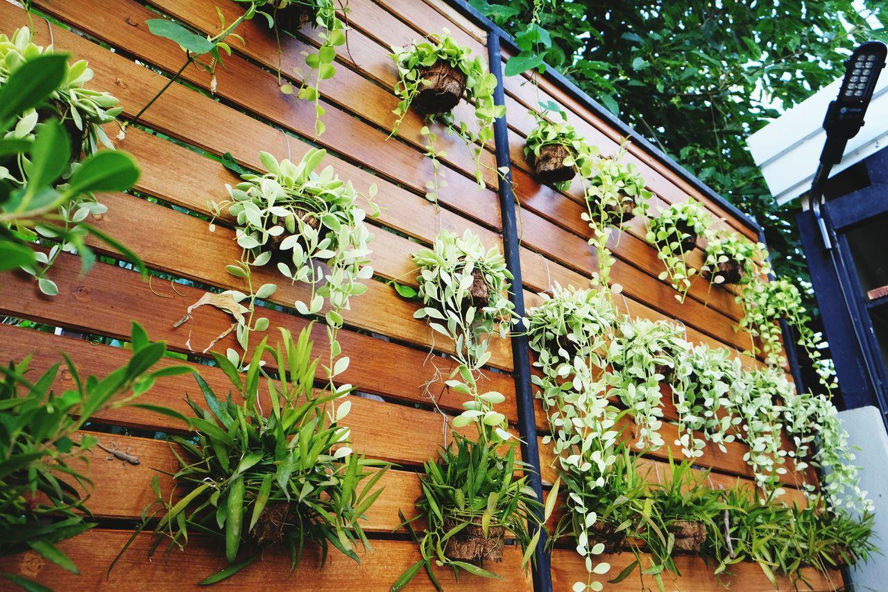 Garden Garden Photography Wall Garden Wall Green
