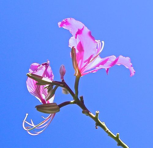 Delicate and pure colours. Beauty In Nature Blooming Flower Flower Head Fragility Freshness Nature Petal Pink Color