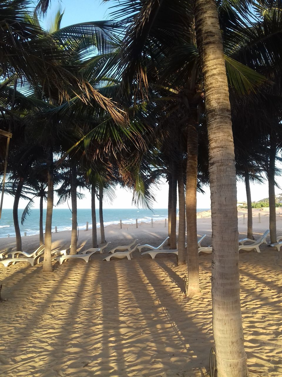 palm tree, tree, beach, sea, day, sand, tree trunk, nature, outdoors, no people, scenics, sky, water, beauty in nature