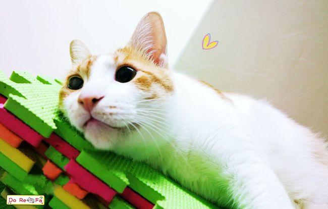 My love Cat Cute 咪咪貓貓