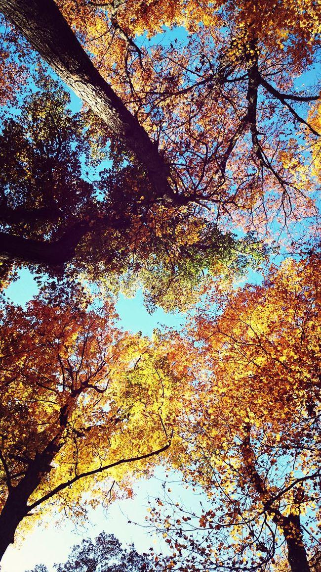 Beautiful Nature XPERIA