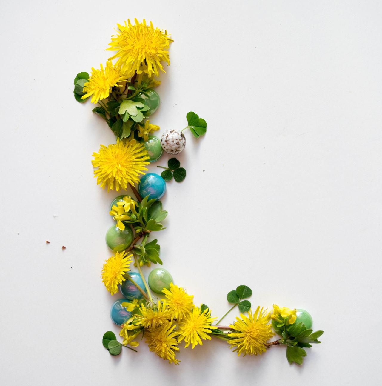 Alphabet Flower Fragility Freshness Growth L Leaves Letter Letter L Plant Studio Photography Studio Shot