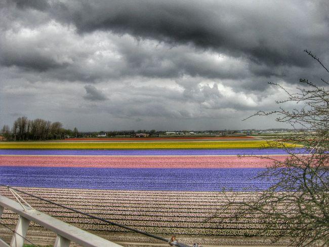 Flowerfields Keukenhof Hyacinths And Tulips Lovemillionsflowers Lovelynatureshots IloveHolland