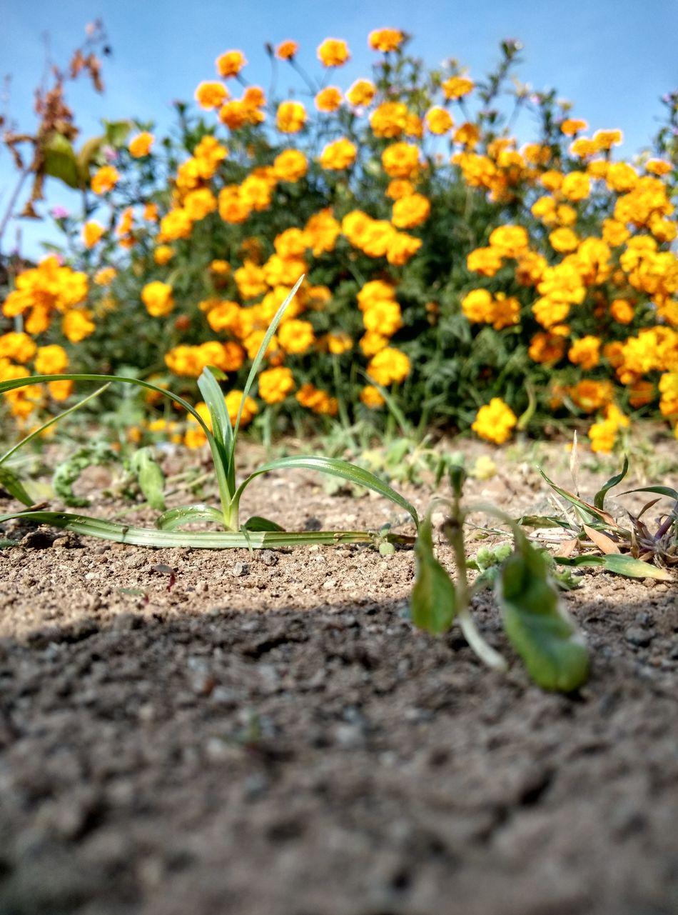 Enjoying Life Flowers, Nature And Beauty Little Journey Daylight ThePerfectclick :)