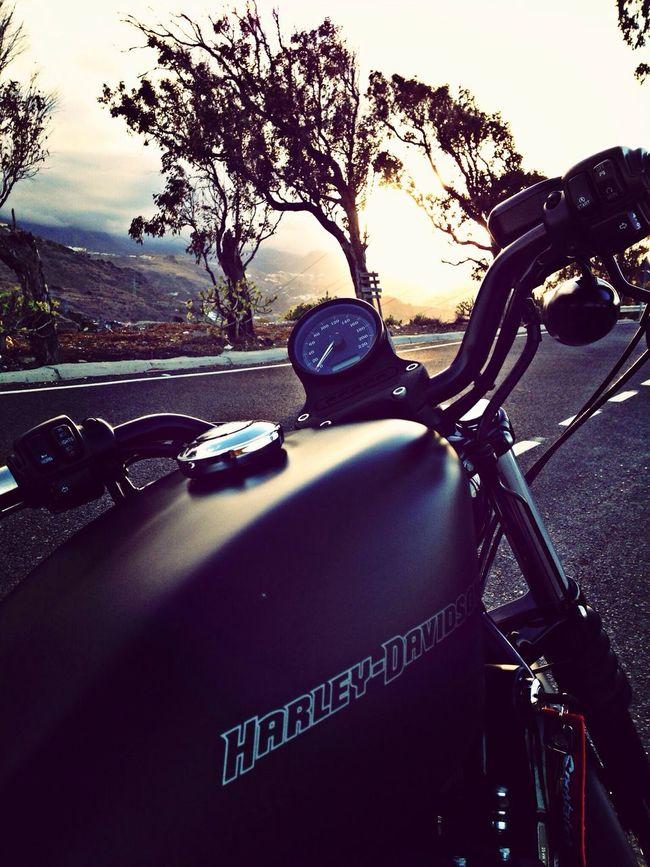 Harley Davidson Sportster Chasing Sunsets Ride Buscando Al Sol