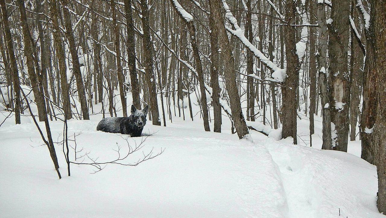 Beautiful stock photos of wolf, , Animal Behavior, Animal Themes, Animals In The Wild