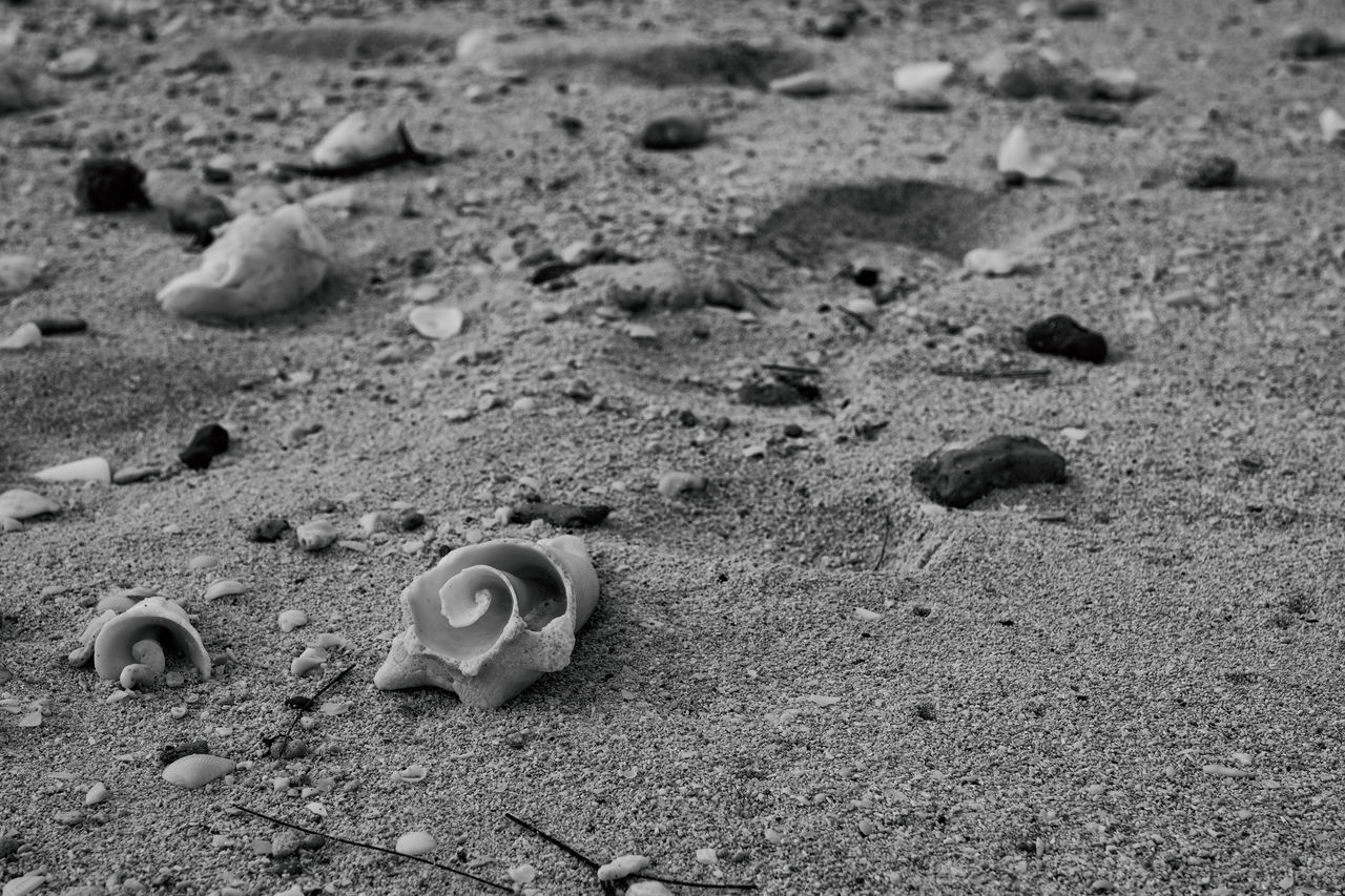 From the Sea Beach Beachphotography Black And White Photography Broken Close-up Conch Shells Day FootPrint Nature No People Outdoors Photographyisthemuse Sand Sea Shells Seaside