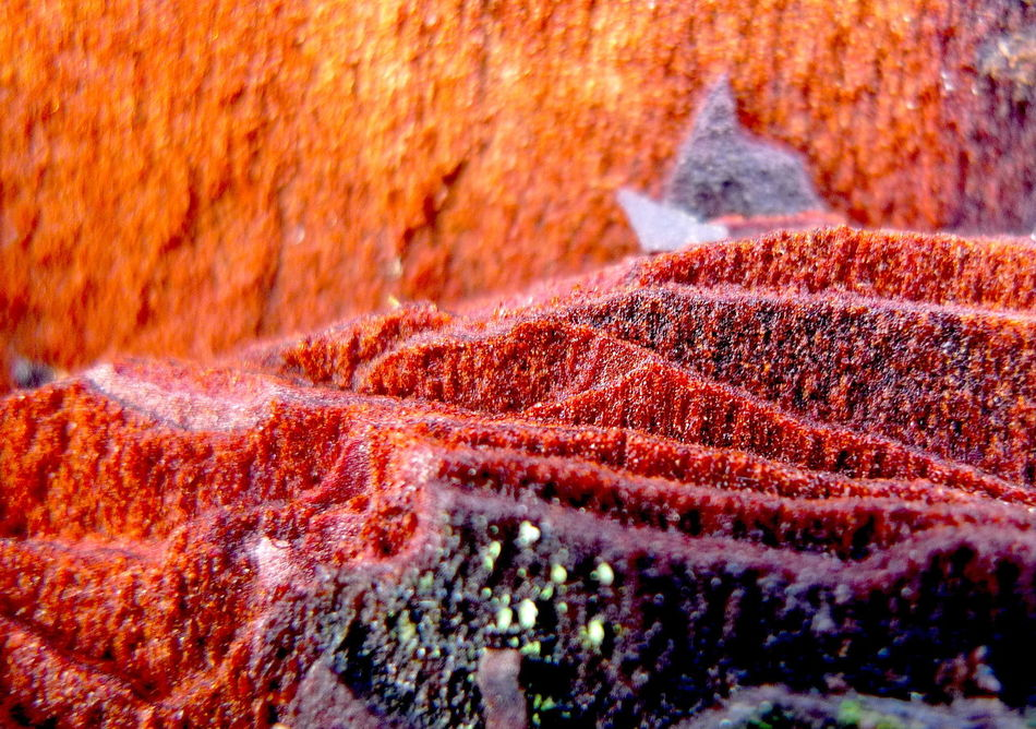 Abstract Beauty In Nature Camaïeu Detail Dégradé Geometry Macro Photography Mystery Nature Photography Orange Pattern Rouge Superposition Textured  Textures And Surfaces Violet Wood écorce