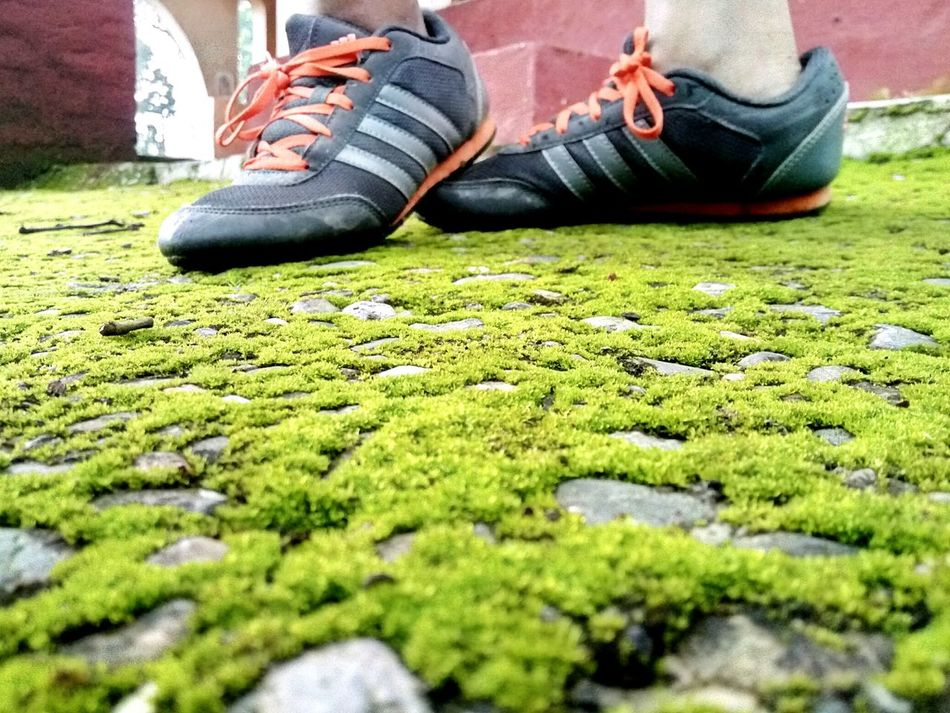 Shoes Grass Lawn Shoes And Lawn Green Abstract We search Beauty all around, when it is right below our feet... The Earth.