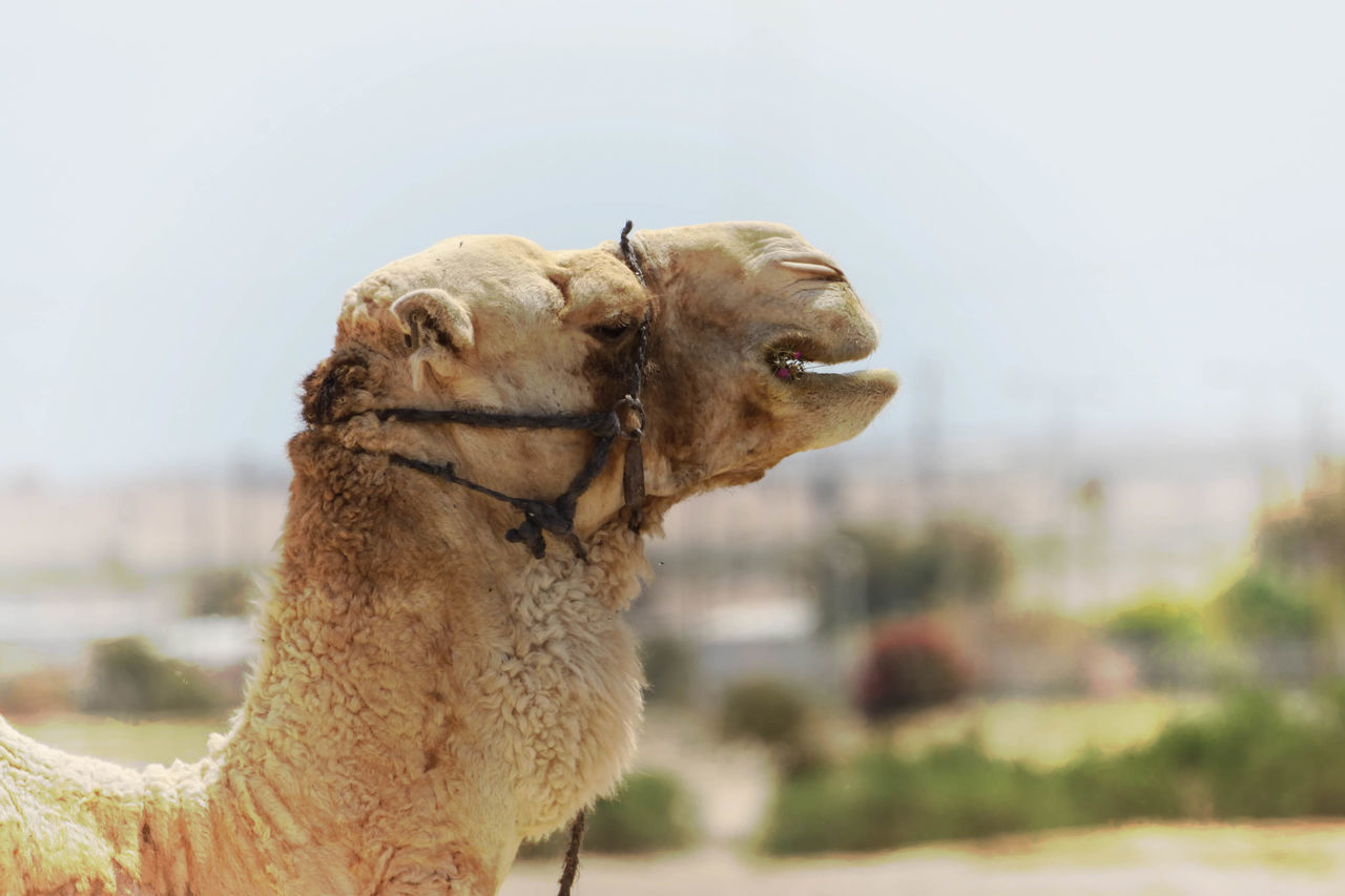 Beautiful stock photos of hump day, animal themes, focus on foreground, animals in the wild, one animal