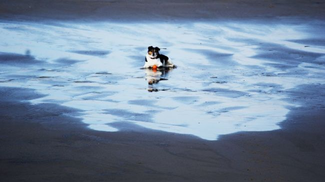Jack Russell Beach Dog Single Dog Dog And Water Dog Playing With Tides