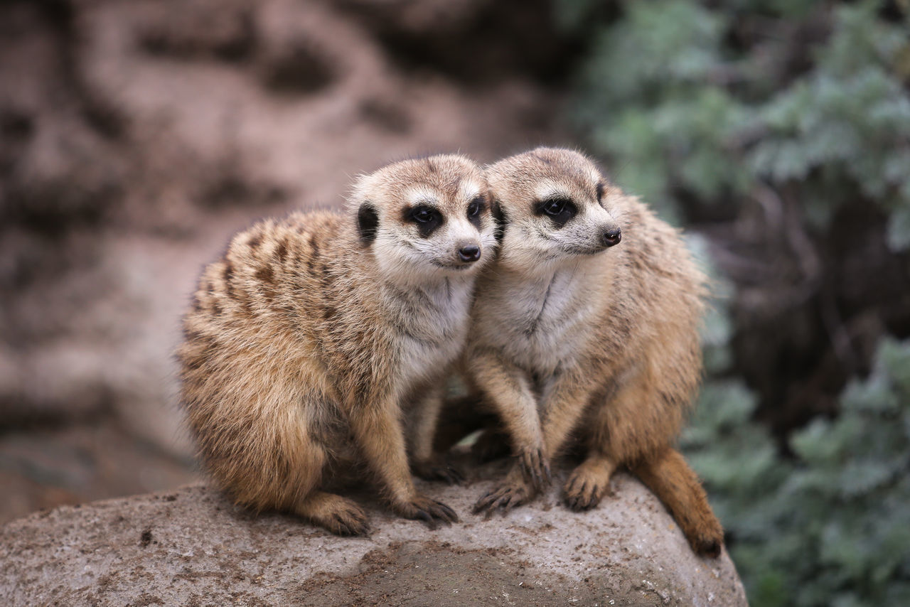 Beautiful stock photos of tiere, Animal Themes, Animal Wildlife, Animals In The Wild, Argentina