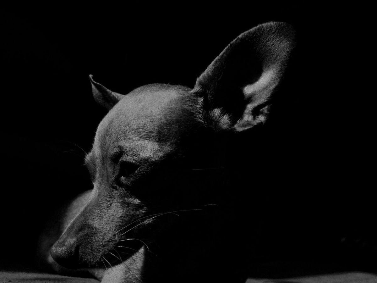 Dog Prague Ratter Blackandwhite First Eyeem Photo