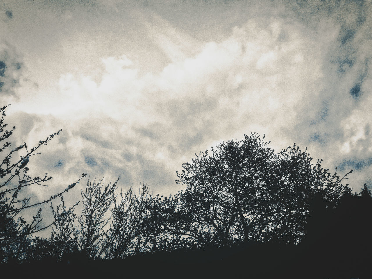 tree, sky, nature, low angle view, silhouette, cloud - sky, beauty in nature, no people, outdoors, tranquility, scenics, day, growth