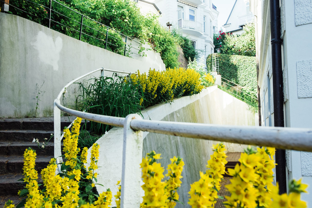 Architecture Beauty In Nature Blooming Building Exterior Built Structure Close-up Day Flower Flower Head Fragility Freshness Growth Nature No People Outdoors Plant Tree Window Box Yellow