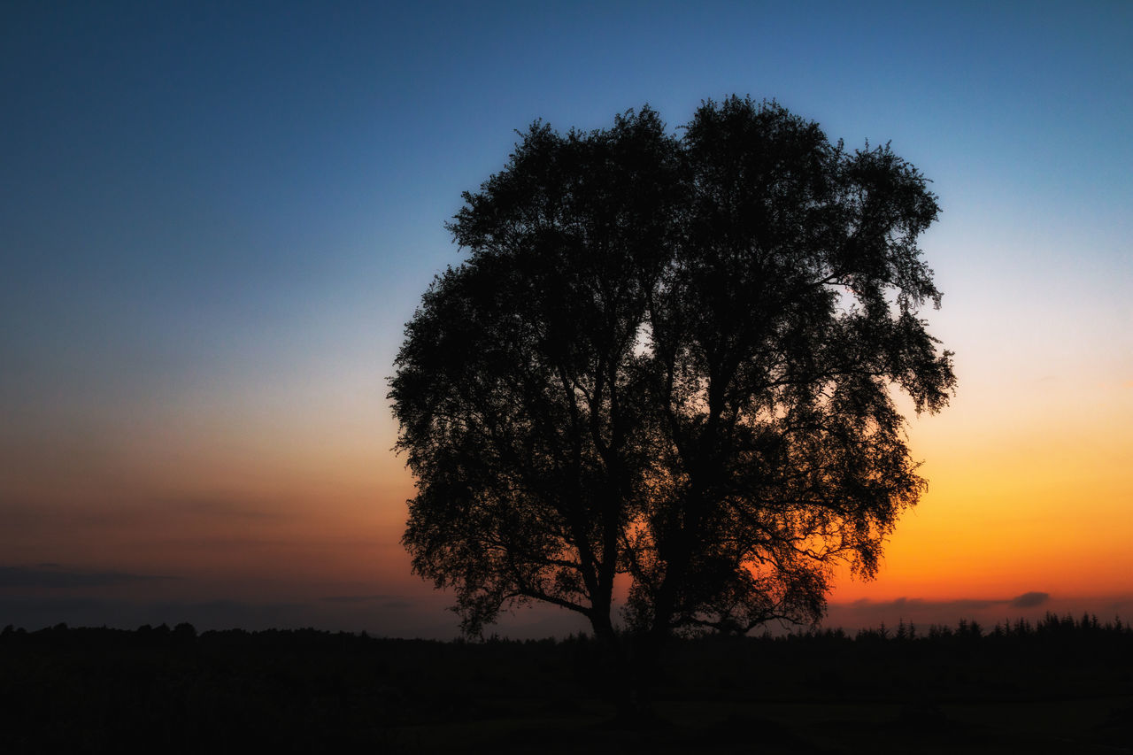 Battlefield Beauty In Nature Culloden Culloden Battlefield Landscape Natural Light Portrait Nature No People Outdoors Scenics Silhouette Sky Sunset Tree