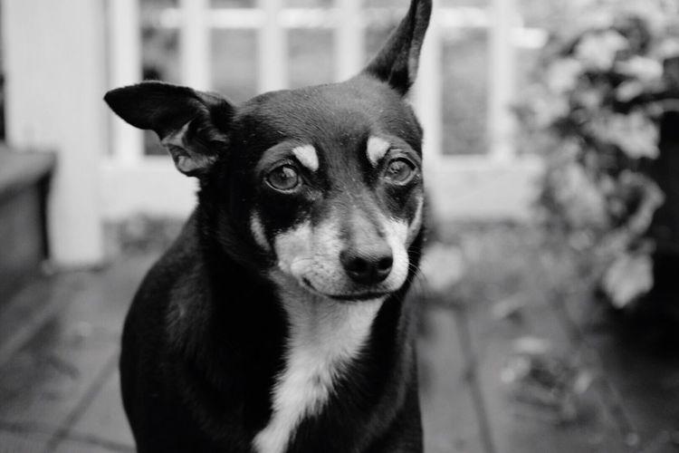 my dog 💜 First Eyeem Photo