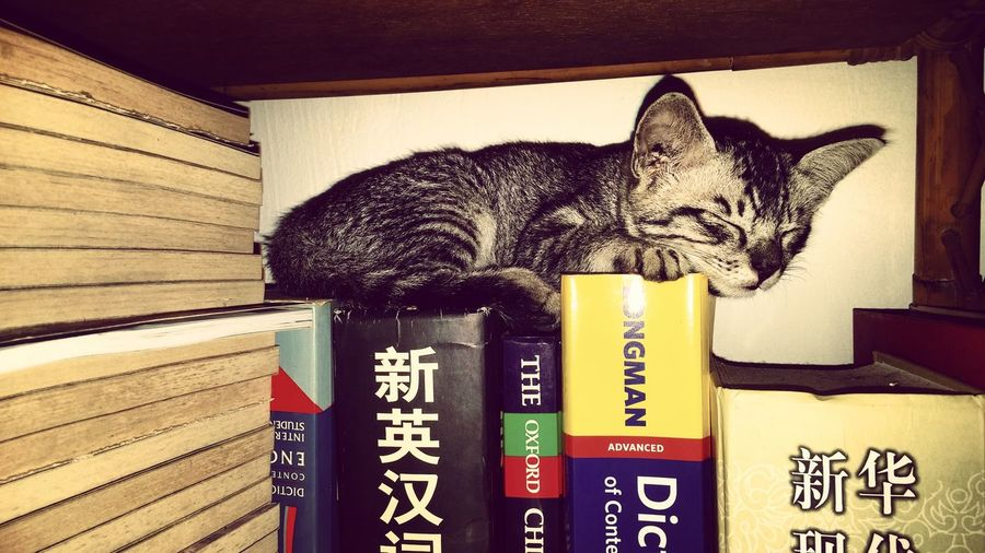 After a long day of studying! VSCO 18135mm Canon Canonimagingasia Canonimagingacademy Day CanonSG Canonphotography Canonasia Canon 70d Close-up Indoors  Books Bookshelf Cat Cats Of EyeEm Catoftheday