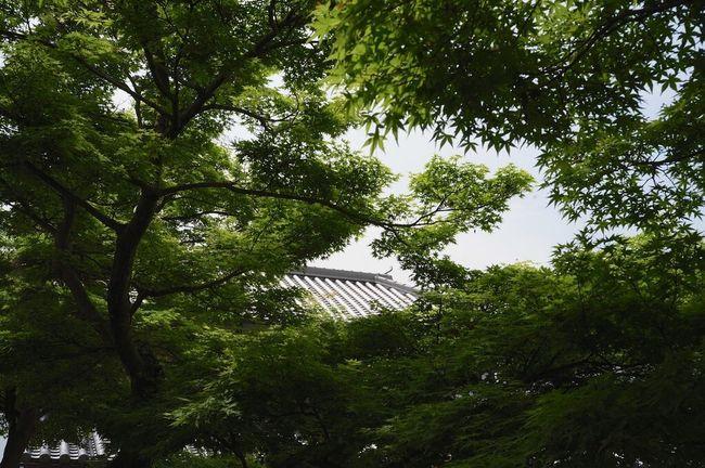 Voigtländer Ricoh GXR Japan Green Green Green!  Color-skopar 25mm/f4
