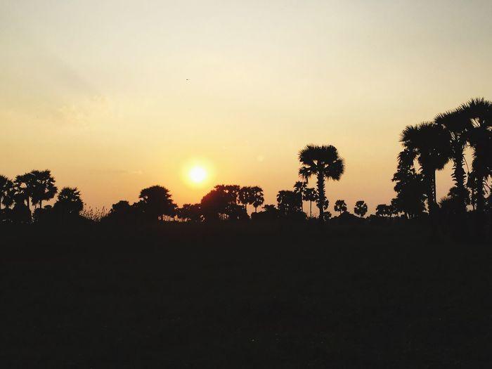 Myanmar, Mrilktila, Mandalay state, skyline, sunset, , Tree, Nature