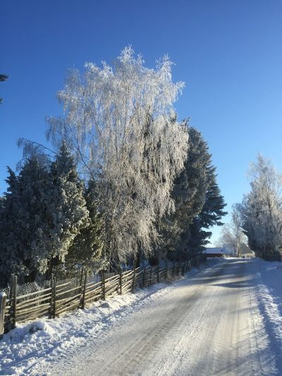 Winter Snow Check This Out Enjoying Life Peace And Quiet Trees