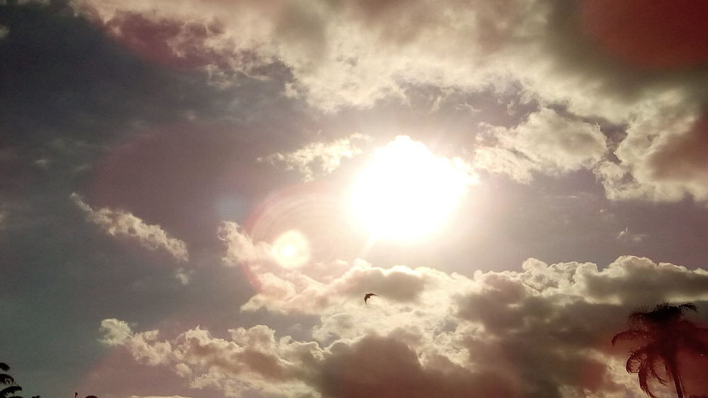 The Sun and The Bird... Sunbeam Sky Sunlight Nature Flying Sun Cloud - Sky Beauty In Nature Low Angle View No People Outdoors Heaven Day Incredible VenezuelanPhotographer ParqueDelEste Beautiful Nature Beautiful ♥ Beautiful View