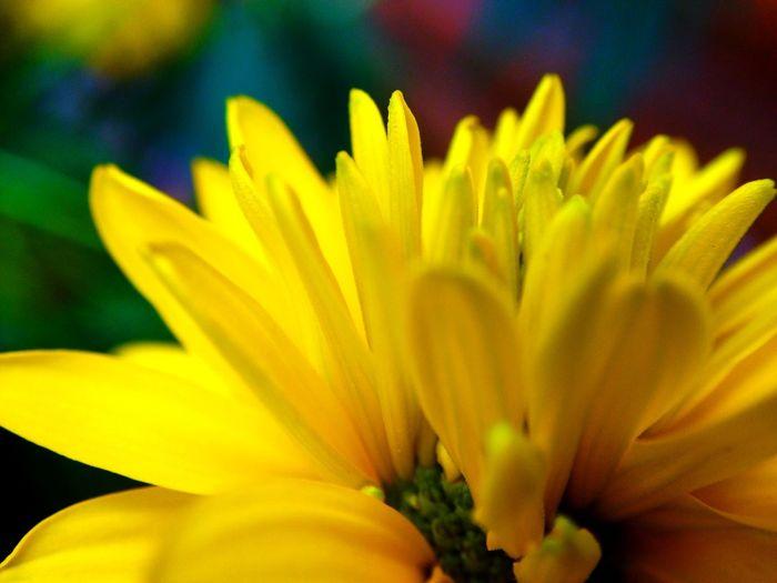 Flower Rebeccia