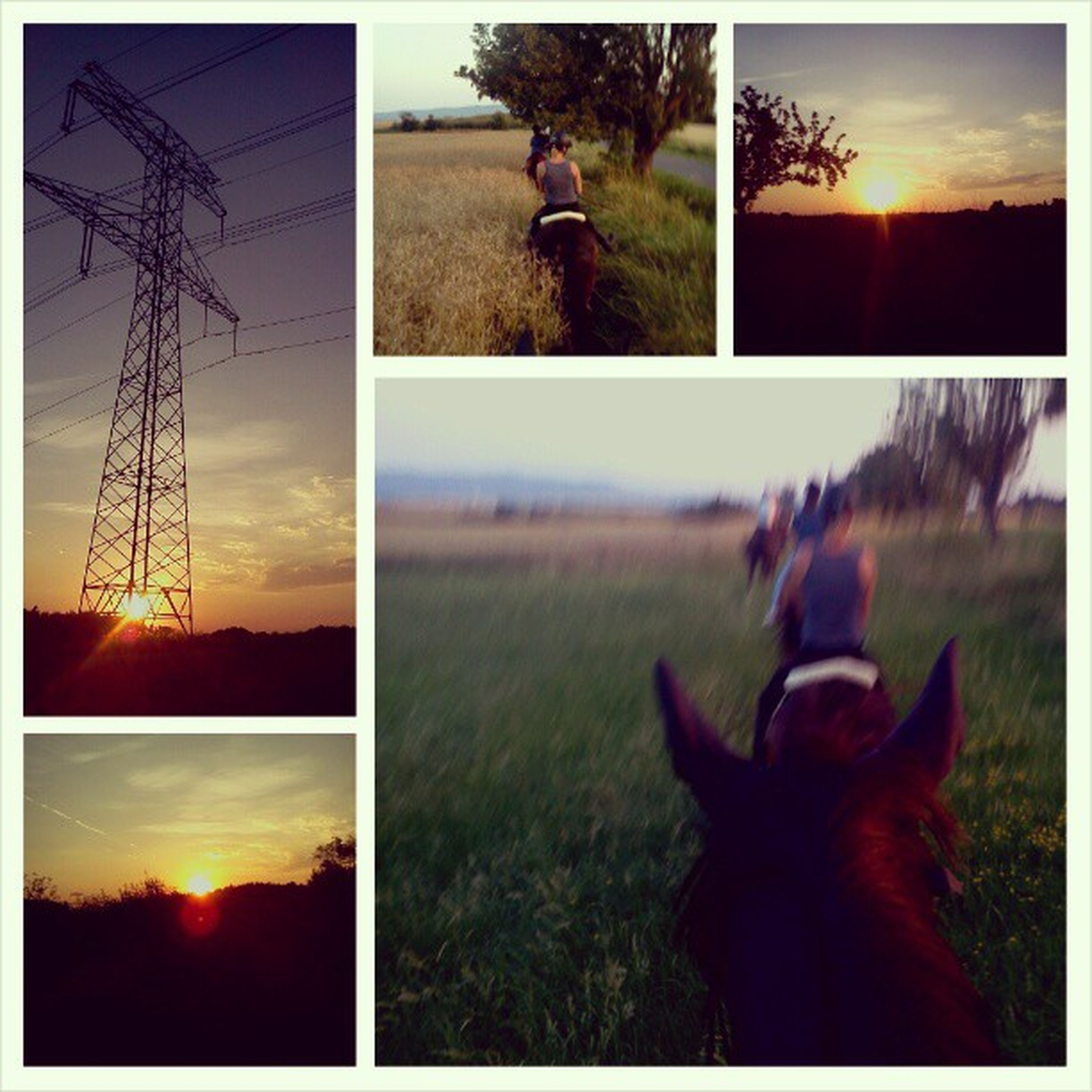 transfer print, domestic animals, sunset, auto post production filter, tree, sky, one animal, mammal, animal themes, pets, field, horse, grass, sunlight, sitting, leisure activity, lifestyles, standing