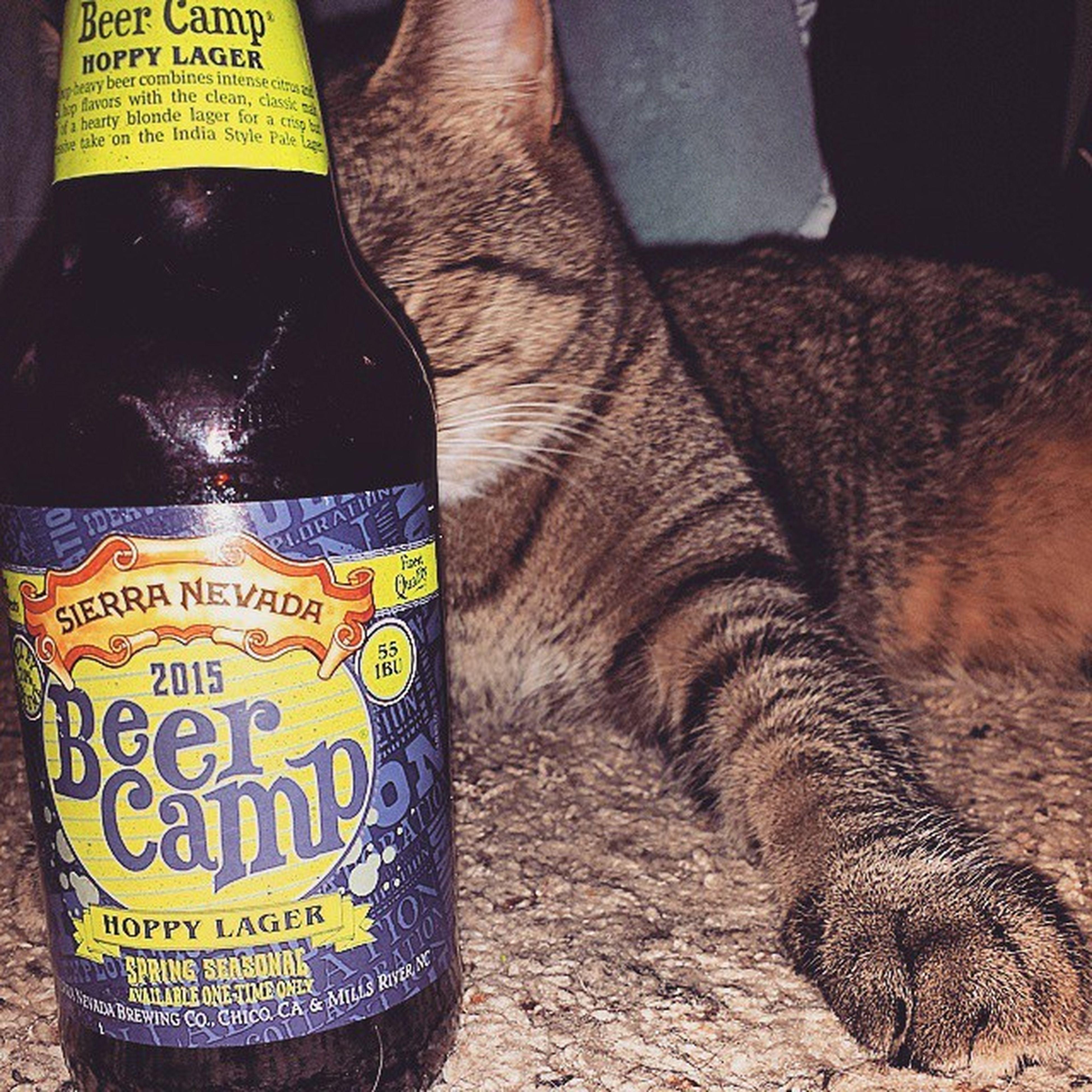The exclusive Beercamp Sierranevada Seirranevadabrewing Onetimeonly Seasonal Spring 2015  Indiapalelager Thinkwarmthoughts California Hoppylager Springseasonal BabyMax Finestquality Craftbeer Craft Craftbrew Brew Teddybrewski Brewtallyhonest Brewhaha IMbrewDABADEEDABADIE