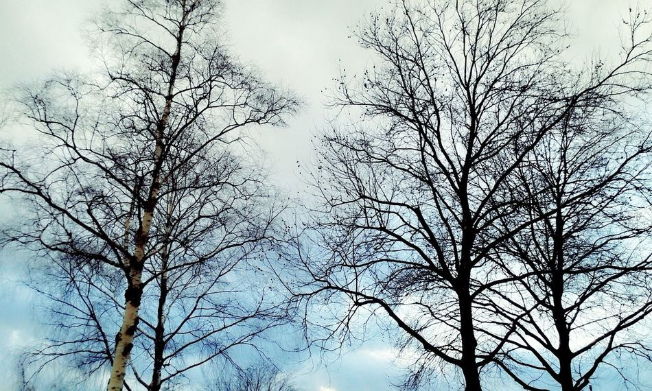 Pastel Power Just trees Trees Tree And Sky Tree_collection  Winter Trees Blue Cloudy Sky A Little Bit Of Pastel Pastel Colors Eye4photography  EyeEm Gallery Simplicity Mobilephotography Galaxys3 Nieuwegein