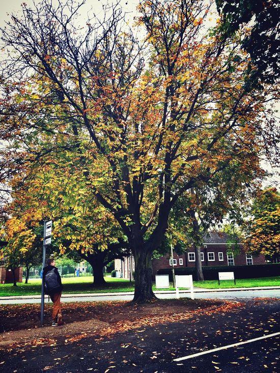 Autumn Leaves 秋 故事。