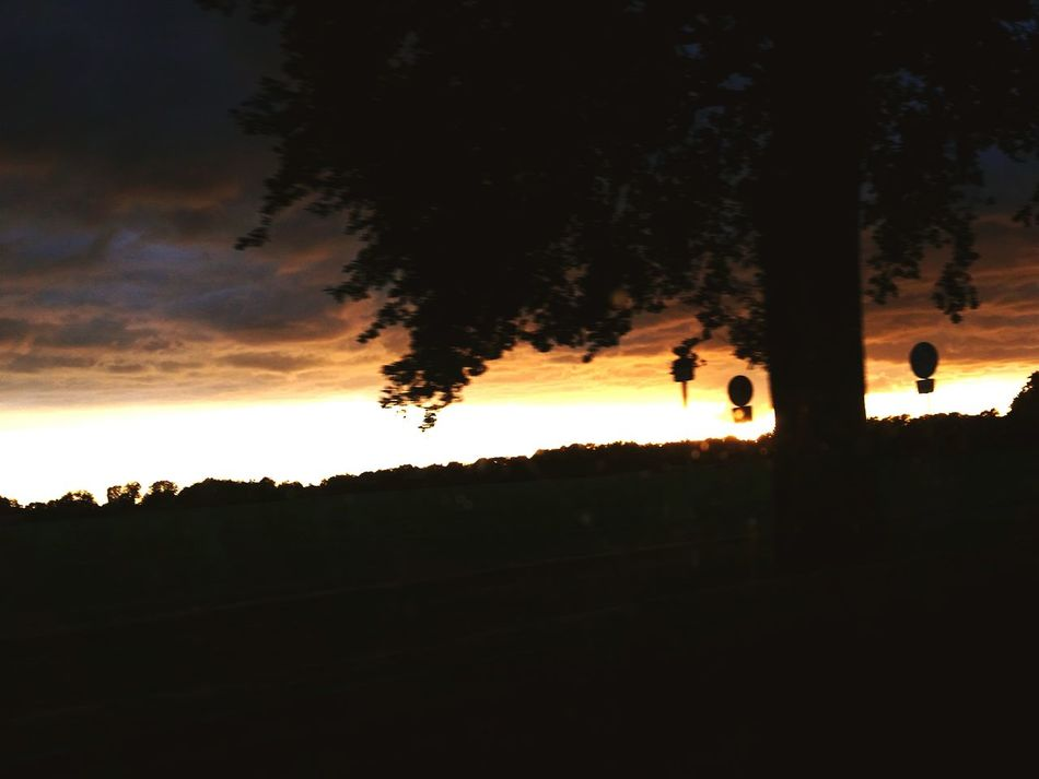The Moment - 2016 Eyeem Awards Sky Nature Tree Beauty In Nature Cloud - Sky Sunset Sunlight EyeEm Nature Lover Idyllic From Dusk Till Dawn Abenddämmerung