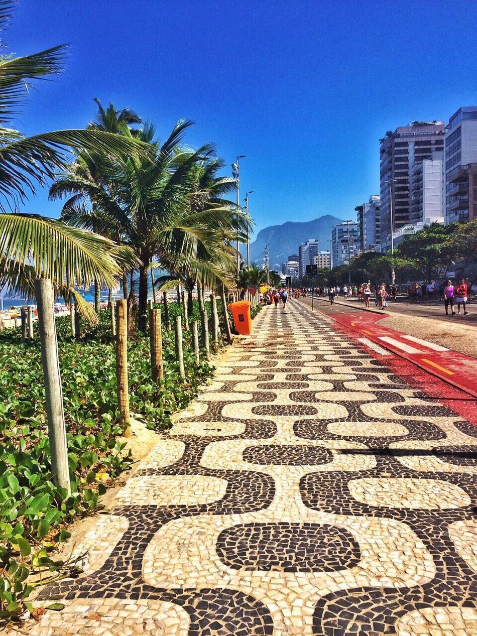 The Way Forward Palm Tree Blue Tree Growth Day Clear Sky Outdoors Built Structure Building Exterior No People Architecture Sky Nature Brazil Rio Rio De Janeiro Ipanema Ipanema Beach Riodejaneiro
