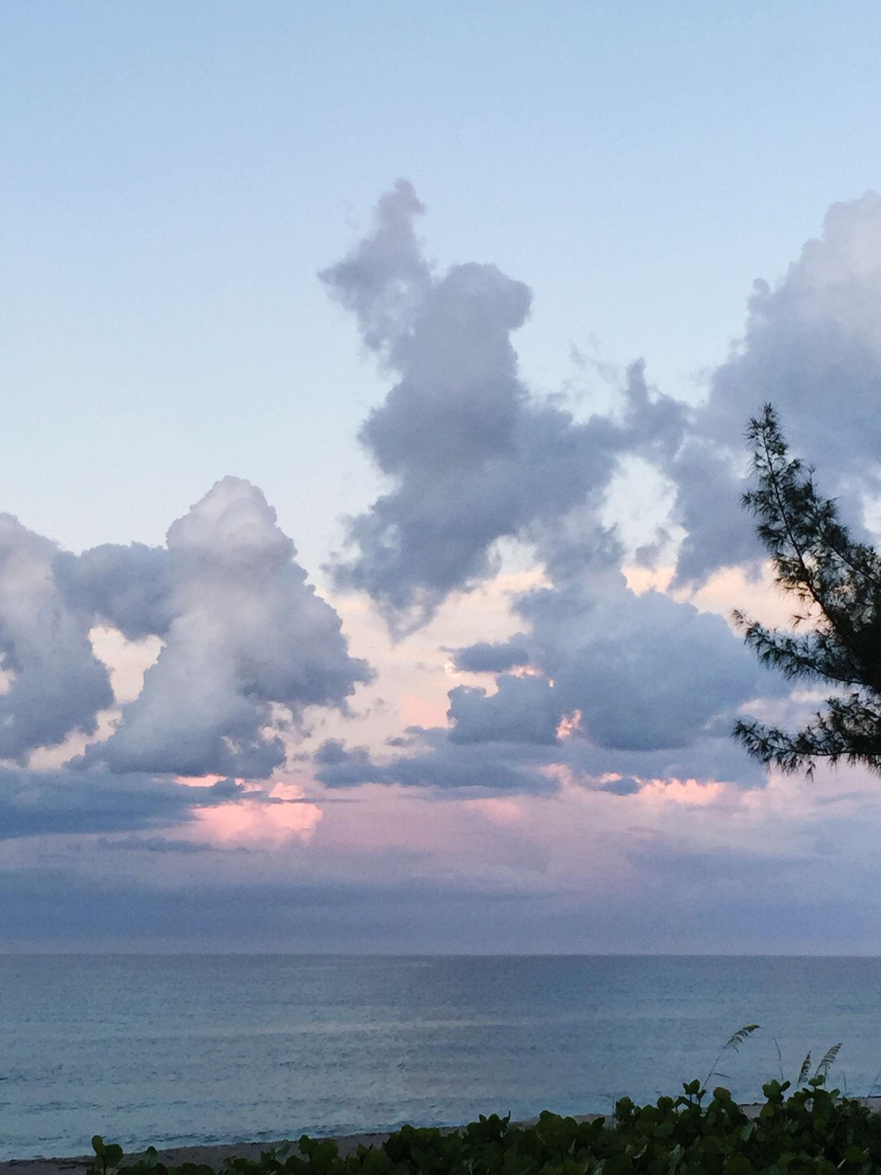Sea Sky Nature Scenics Tranquil Scene Tranquility Beauty In Nature Water Outdoors No People Horizon Over Water Cloud - Sky Day Beach Tree